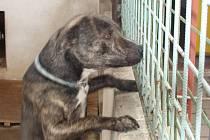 Město může majiteli psů udělit pokutu až 50 tisíc korun nebo mu psy zabavit.