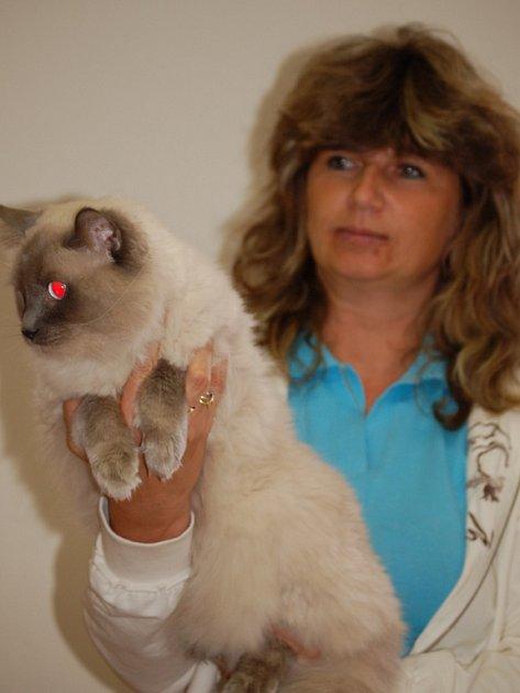 Na výstavu koček přijela se svým dvouletým chovným kocourem také Yveta Jehlářová z Přerova.