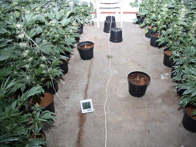 Pěstírna marihuany v Černotíně