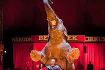 Cirkus Original Berousek