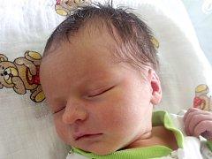 Viktor Cvek, Bezuchov, narozen dne 4. února 2015 v Přerově, míra: 52 cm, váha: 3520 g