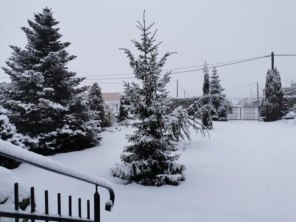 Zahrada pod sněhovou peřinou.