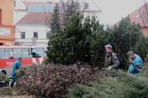 Ekoltes v Hranicích prořezává stromky