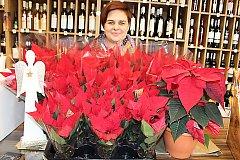 V Hranicích už prodávají vánoční hvězdy, jejíž koupí lidé pomohou hematologicky a onkologicky nemocným dětem z olomoucké nemocnice.