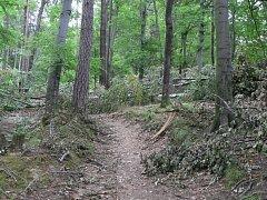 Po celé přírodní rezervaci leží desítky popadaných stromů. Kvůli zákazu vstupu je zde liduprázdno.