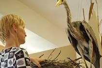Stromy jako domov. Takový název nese výstava, která bude k vidění od 1. června v budově Ornitologické stanice v Přerově.