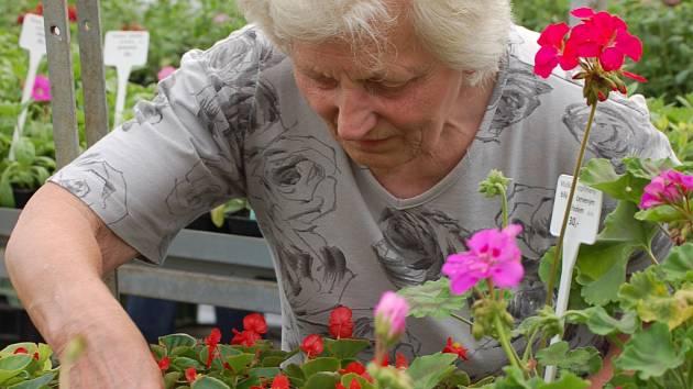 Zahradnictví mají napilno, zájem je o letničky i přísady.