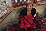 Prodej vánočních hvězd