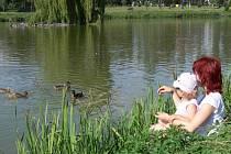 Strach z ptačí chřipky je zbytečný, tvrdí rybáři. Důvodem úhynu kachen jsou velká horka.