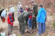 Děti si ve Valšovickém polesí vyzkoušey sázení nových lesních stromků