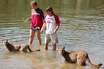 Šelmy se jmény Baghira a Kelly milují vodu a kromě toho umí jezdit na koni.