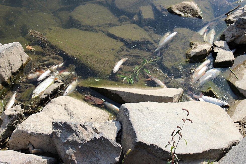 Masivní úhyn ryb v Bečvě v září 2020. Hranice