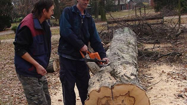 V přerovském parku Michalov muselo být pokáceno několik vzrostlých stromů