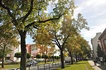 Centrum Hranic čeká obnova zeleně