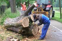 Strom, který spadl v aleji u tenisových kurtů, měl na první pohled uhnilé kořeny.