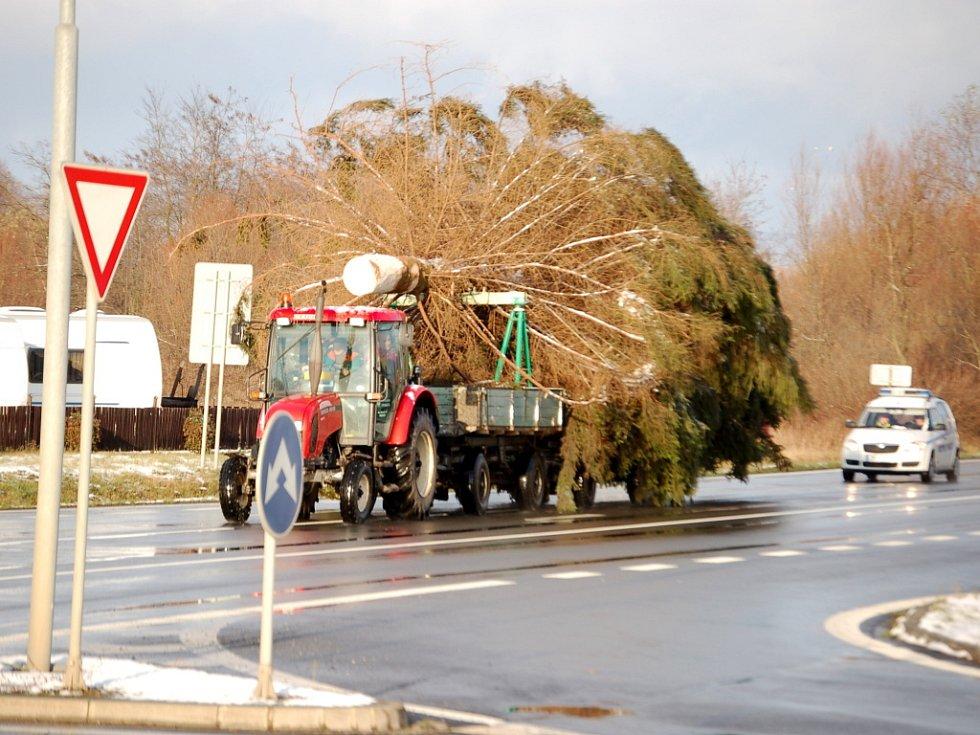 Strom byl na dvou vlečkách dopraven z Libavé do Přerova. Pomocí jeřábu jej pak pracovníci technických služeb zasadili do dlažby na Masarykově náměstí.