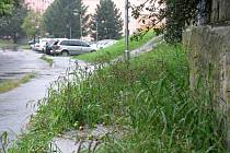 Travnaté plochy v Hranicích jsou nyní celkem posečené. Lidé pamatují horší časy.