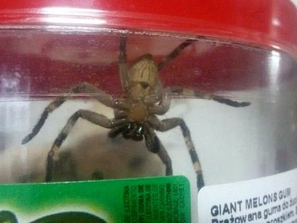 Vjedné zhranických prodejen našli vbanánové krabici exotického pavouka