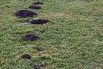 Býškovické fotbalové hřiště ničí krtci