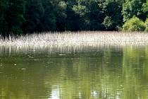 Podle předběžných výsledků šetření, rostliny otrávil známý přípravek na likvidaci plevele.