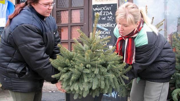 Hitem letošních Vánoc jsou podle prodejců takzvané kontejnerové stromky.