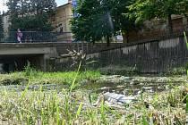 Posečená tráva ve Veličce odhalila spoustu pohozených odpadků