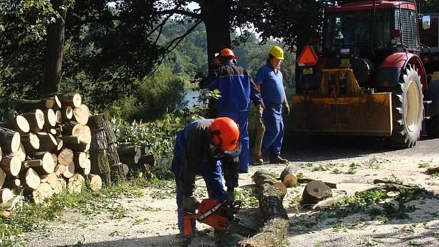 Stromovou alej v blízkosti rybníka v Přerově začali v pondělí 24. srpna kácet pracovníci Povodí Moravy.