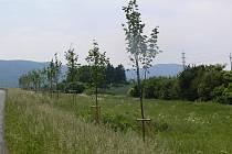 Koncem května dokončili v Hranicích regeneraci zeleně, při které vysázeli devadesát lip v okolí CTParku