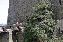 Planá hrušeň na hradě Helfštýně. Roste přímo před vstupem do hradu a její příběh je podle pověsti spojený s příběhem zdejšího rodu Ludanických