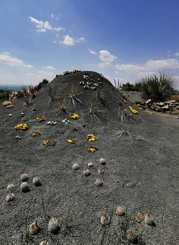 Venkovní kaktusy a juky na nově vytvořené lokalitě