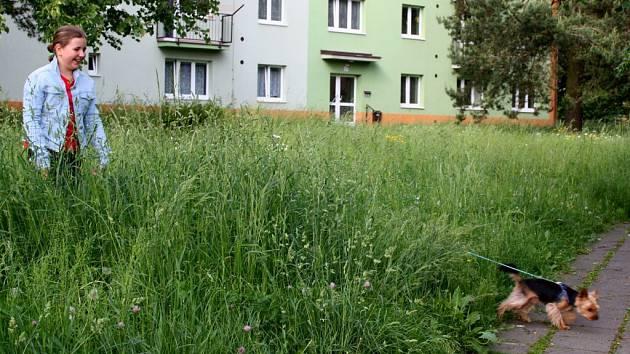 Na Struhlovsku v Hranicích se ztrácí malí psi i menší děti. Společnost Ekoltes nestíhá sekat trávu.