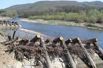 Ojedinělé zpevnění břehů koryta Bečvy ve Slavíči
