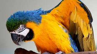 fotky mužů s velkými ptáky
