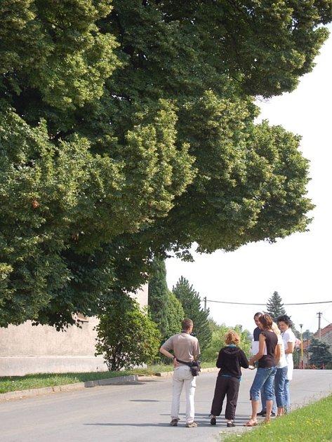 Stojanova lípa z Beňova se probojovala do finále ankety Strom roku. O tom, zda zvítězí, rozhodne veřejné hlasování.
