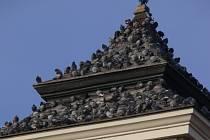 Holubi v centru Prostějova ničí i střechy.