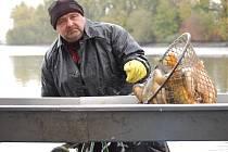 Davy lidí zavítaly i v deštivém počasí na tradiční výlov Hradeckého rybníka v Tovačově. Návštěvníci se mohli dívat pod ruky mistrům Petrova cechu a ochutnat některou z oblíbených rybích pochoutek. Výlov potrvá i v neděli, a to od 8. 30 do 15 hodin