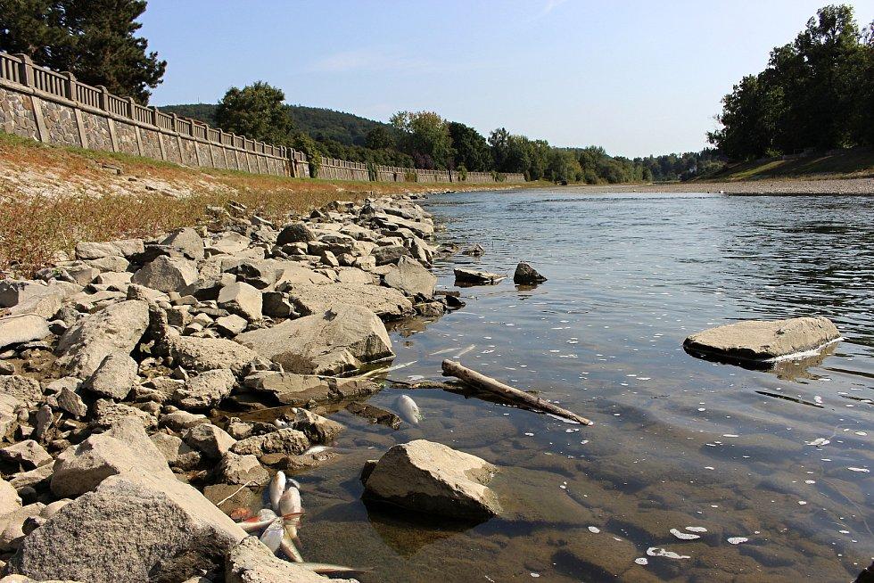 Následky masivního úhynu ryb v řece Bečvě v Hranicích, pondělí 21. září 2020