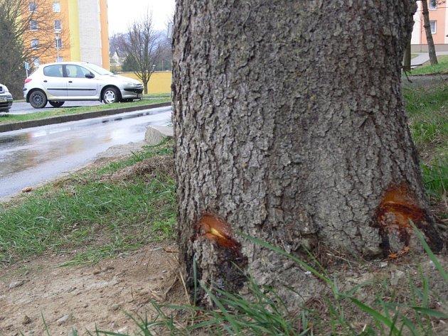 Vandal sekerou poškodil zdravé smrky, pak do nich nalil benzin