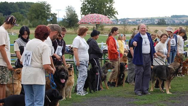 Psi i jejich majitelé se snažili na Hanáckých přeborech podat co nejlepší výkony.