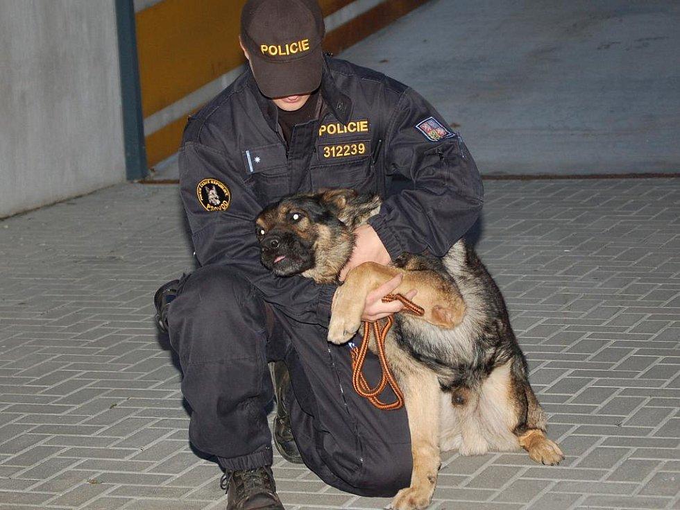 Perné dva týdny má za sebou přerovský psovod Tomáš Zaoral,který se se svým psem Axanem podílel na rozsáhlých pátracích akcích.