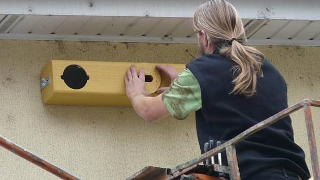 Ornitologové umístili na budovu magistrátu čtyři speciální tříkomorové budky, které jsou určeny pro rorýsy obecné.