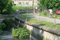 Šestice mladých javorů nepřežila v Hranicích uplynulý víkend. Neznámý výtržník přeťal v noci ze soboty na neděli jejich kmeny a koruny naházel do potoka. Město tím způsobil škodu třicet tisíc korun.