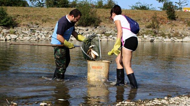 Masivní úhyn ryb na Bečvě