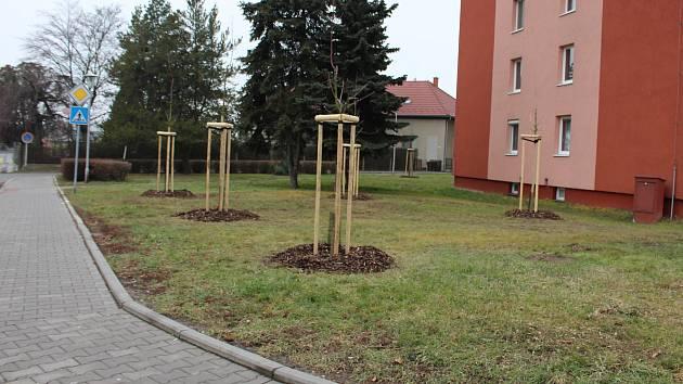 Nové dřeviny na třídě 1. máje v Hranicích
