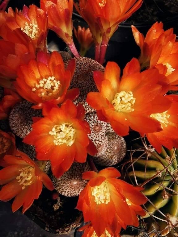Kaktusy a tilandsie.