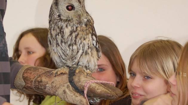 Také o tajemných sovách a zajímavostech z jejich života se dozvědí tento týden žáci z přerovských škol.