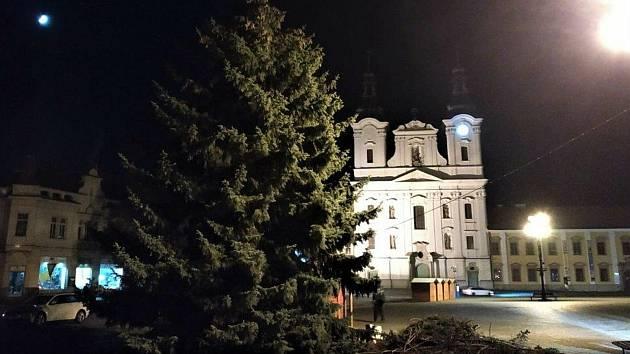 Vztyčení vánočního stromu - smrku pichlavého z Vések, v sobotu 21. listopadu na Masarykově náměstí v Uherském Hradišti.