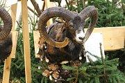 Na přehlídce bylo k vidění přes tisíc trofejí spárkaté zvěře a šelem.