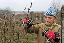 Vojtěch Luža při stříhání révy ve vinici s velehradskou bazilikou za zády