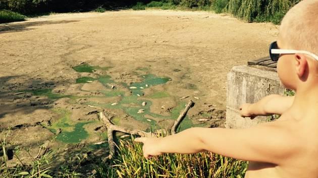 Po vypuštění rybníku na Smraďavce uhynulo stovky ryb.